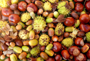 Colourful fall detritus of horse chestnuts, acorns, beechnuts and cobnuts as a natural background